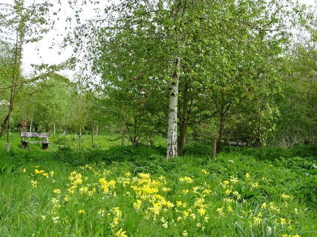 Prestwold Spring